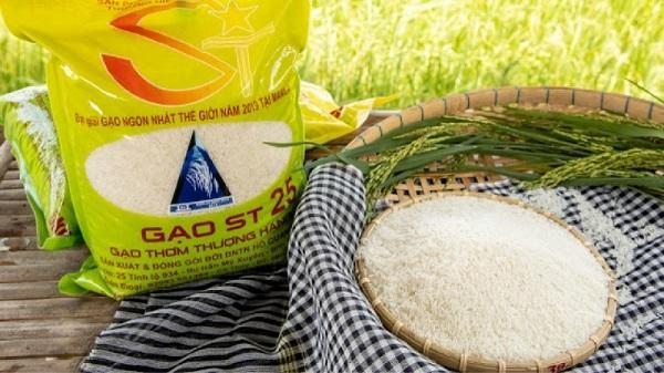Cần có chiến lược bảo vệ thương hiệu gạo ST25 cho doanh nghiệp